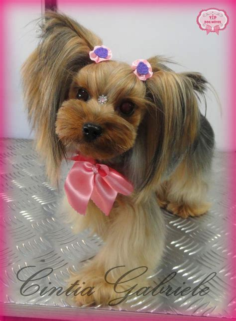 korean yorkie haircuts 20 best grooming stuff images on pinterest japanese