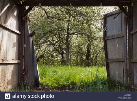 Open Barn Door View Through A Open Barn Door Into The With Trees And Fresh Stock Photo Royalty Free