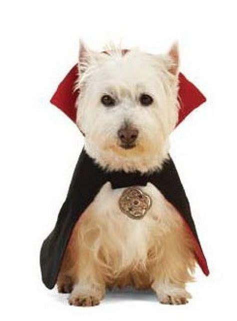 moldes de vestido perro consejos de fotografa patrones ropa de perro facilisimo com