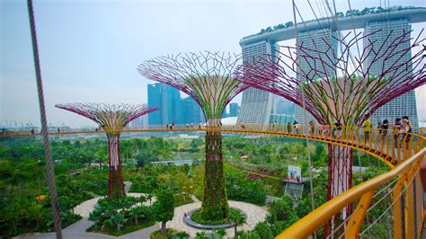 gardens by the bay pictures view photos images of