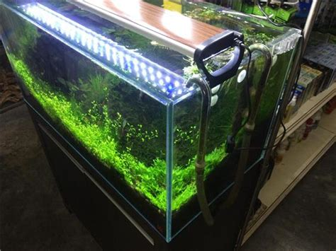 sobo led lighting for planted tank 30 end 5 1 2018 7 11 pm