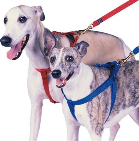 how to put on a puppy harness how to put on a harness top houses
