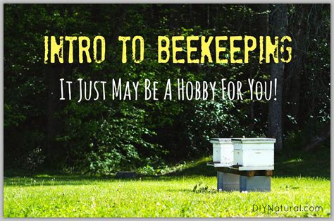how to keep bees an intro to help get your hands dirty
