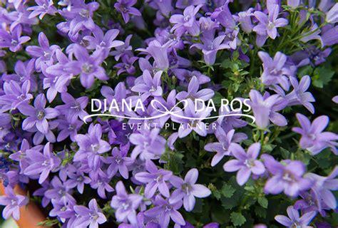 fiori lilla fiori lilla stratfordseattle