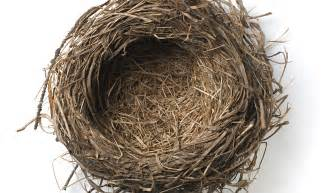 The Nest In An Empty Nest My Footsteps Echo In The The