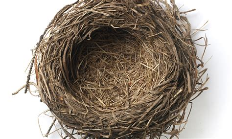 The Birds Nest all our needs are special october 2015