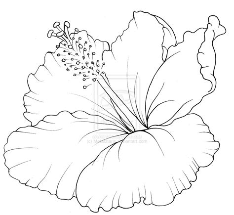 hibiscus flower coloring pages hibiscus flower tattoo by metacharis on deviantart quotes