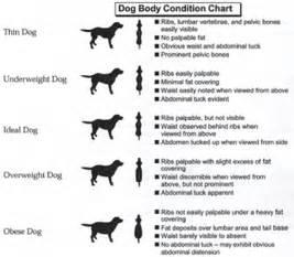 overweight labrador retrievers a new study