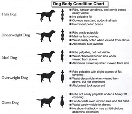 lab puppy feeding chart diet chart for labrador search results calendar 2015