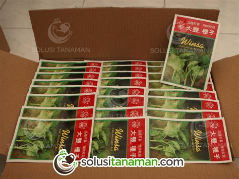 Bibit Sayur Kailan kailan kale winsa 20 gr bibit tanaman sayur hidroponik solusi tanaman