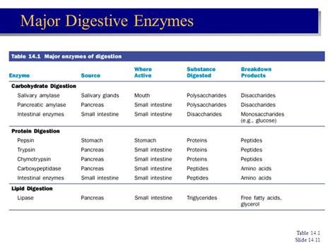 digestive enzymes and their functions table chapter 14 the digestive system and nutrition ppt