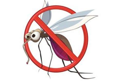 disinfestazione zanzare giardino come effettuare la disinfestazione di zanzare nel giardino