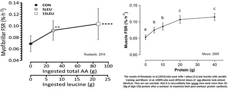 Curve Whey Protein More Evidence Of A Ceiling Effect For Protein Synthesis At
