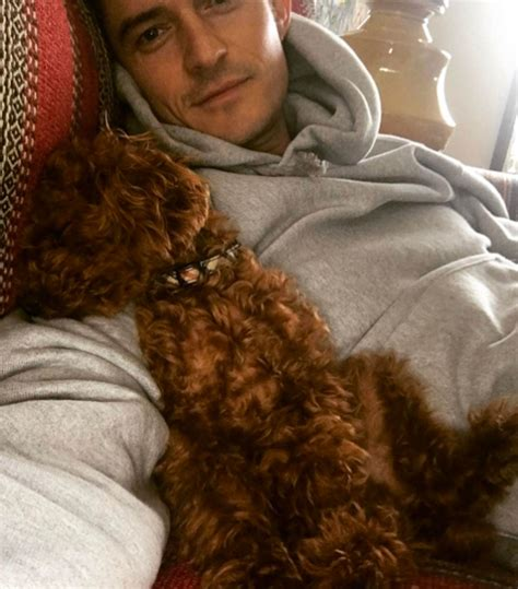 orlando bloom puppy katy perry dog orlando bloom dog different people