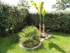 design petit jardin avec palmier montreuil 22 palmier