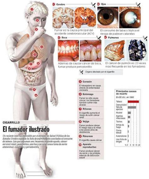 efectos del cigarrillo la educaci 243 n f 237 sica en la etapa de primaria 191 un