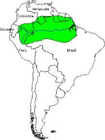 rainforest map south america rainforest map the rainforest