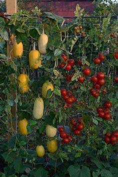 Potager En Bois 7008 by Faire Un Potager En Carr 233 De Jardin Ou Suspendu Avec 3