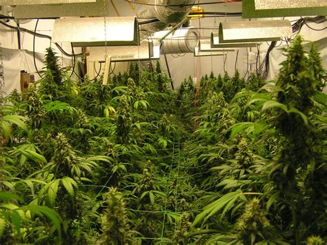 Indoor Plants For Home by The Cannabis Encyclopedia Chapter 10 Garden Rooms