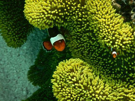 snorkeling  komodo national park erikas travels