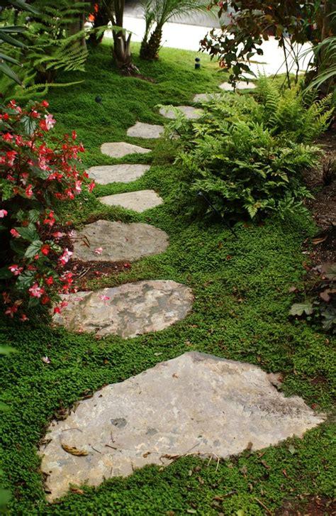 growing ground cover  stones  bricks thriftyfun
