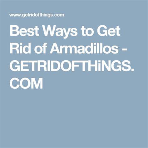 best ways to get rid of armadillos getridofthings com