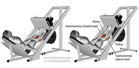 Incline Leg Press Sled Weight by Sled Calf Press Exercise And Weight
