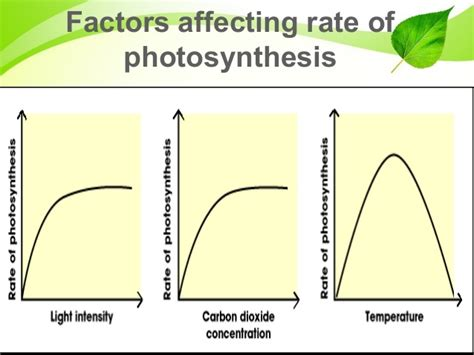 How Does Light Intensity Affect Photosynthesis by Photosynthesis Factors Affecting Light Intensity And