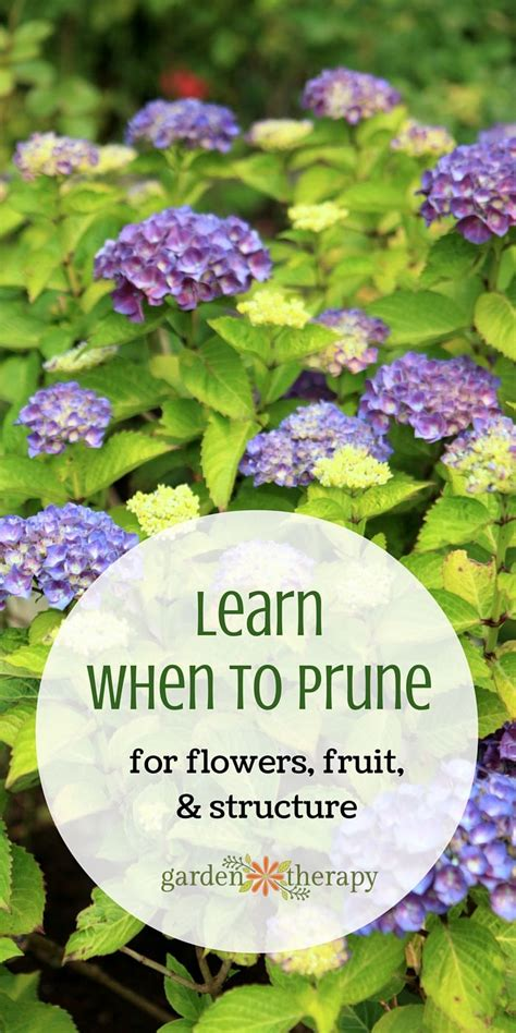 The 25 Best Ideas About Gardening For Dummies On Flower Gardening For Dummies
