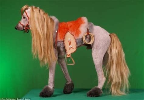 dogs that look like horses trimmed to look like a horses and everything horsey
