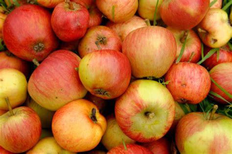 pomme haute de carnet de voyage pommes et fromages de normandie