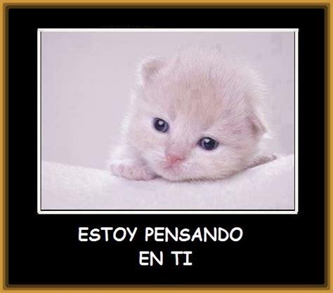 imagenes tiernas gatitos bebes imagenes de gatitos tiernos a lapiz archivos gatitos tiernos