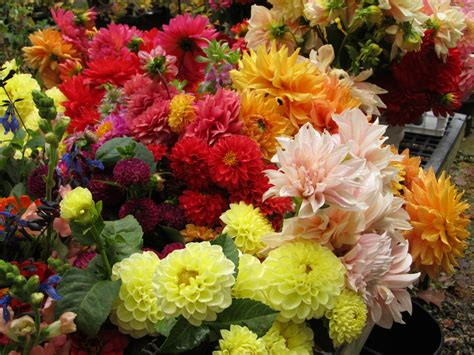 Flowers Garden Grove October Flowers Shady Grove Gardens Nursery Florist And Flower Farmers 828 297 4098
