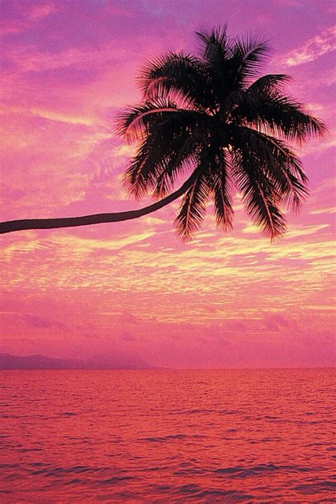 wallpaper summer pink palm palm trees pink summer trees wallpaper palm