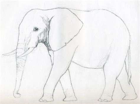 elephant drawing 3d drawing