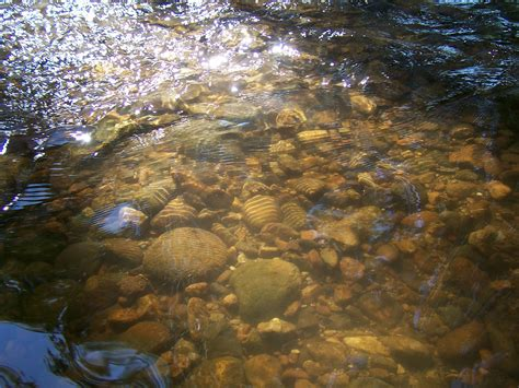 stream bed stream bed wikipedia