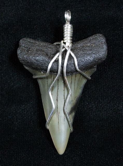 wire wrapped fossil mako tooth pendant for sale 3891