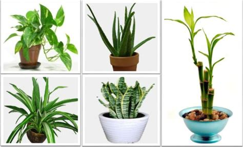 best houseplants the best indoor plants that reduce stress purify the air