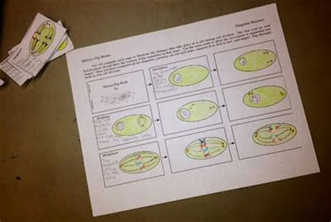 mitosis flip book pictures mitosis flipbooks genius cell biology