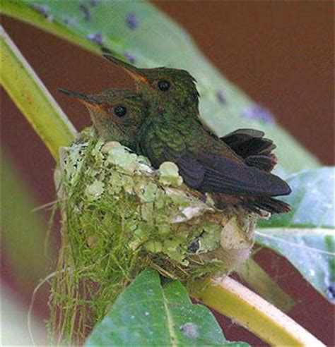 pin ruby throated hummingbirds to feed from her hands