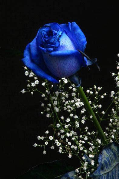 imágenes de rosas que brillen 唯美的蓝色玫瑰 图片大全 第4张