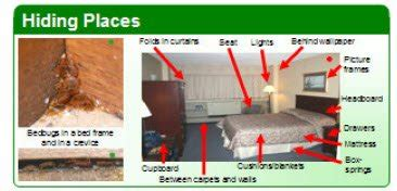 can bed bugs live in electronics how to get rid of bedbugs step by step instructions