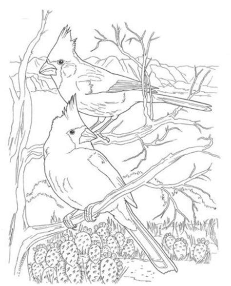 real deer coloring pages deer pages of real living coloring pages