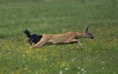 wann hund kastrieren hunde und die jagd silvermoon kennel