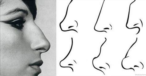 what does it when your s nose is what does your nose shape say about you