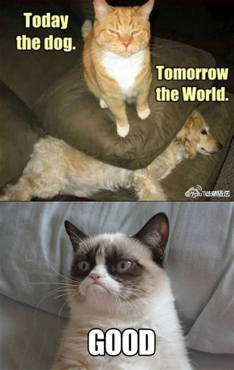 Good Cat Meme - grumpy cat part 2 funny grumpy cat memes