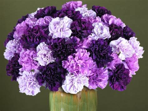 carnation color meanings how do carnations live proflowers