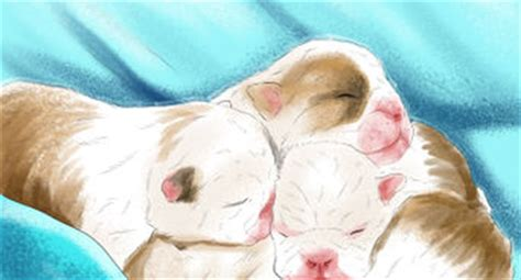 how to keep newborn puppies warm 6 ways to care for newborn puppies wikihow
