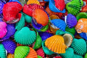 color shell colour colorful sea color florida