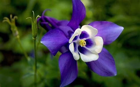 imagenes de flores wallpaper hd wallpapers de flores hd im 225 genes taringa